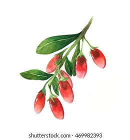 Watercolor branch of goji berries