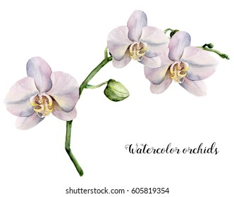 Watercolor branch with white orchids. Hand painted floral botanical illustration isolated on white background. For design or print