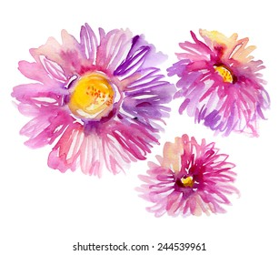 Watercolor bright asters