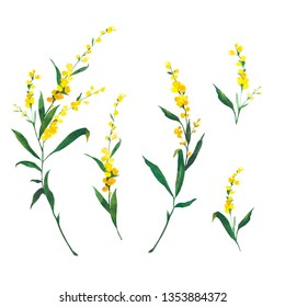 watercolor, bright, watercolor yellow mimosas isolated on white background. Flowers for greeting cards.