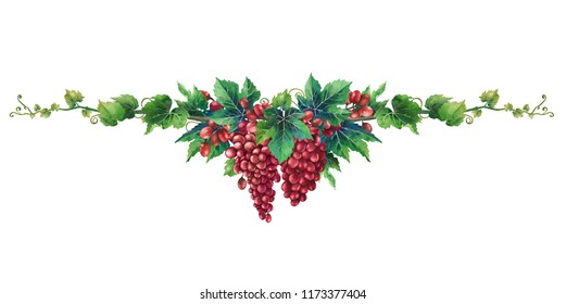 Watercolor bunches of red grapes hanging on the branch with leaves. Hand painted illustration isolated on white background