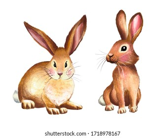 Watercolor bunnies. Illustration of rabbits for Easter.