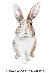 Watercolor bunny isolated on white. Easter rabbit