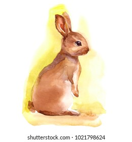 Watercolor bunny rabbit hare illustration