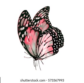 Watercolor butterfly, isolated on white background