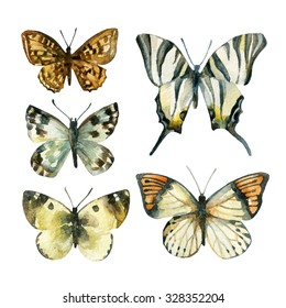 Watercolor butterfly set. Hand painted butterflies isolated on white background