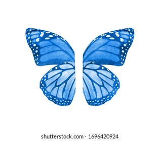Watercolor butterfly wings, isolated on white background