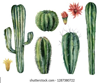 Watercolor cacti and flowers set. Hand painted dessert plants isolated on white background. Botanical illustration for design, print or card.