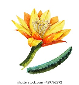 watercolor cactus flower, yellow flower, isolated object,  cactus branch