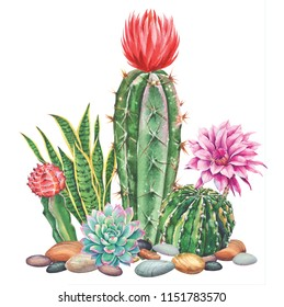 Watercolor with cactus garden. Raster illustration. Illustration for greeting cards, invitations, and other printing projects. on white background.High resolution.Clipping path included.