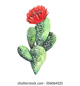 Watercolor Cactus. Original watercolor. Illustration for greeting cards, invitations, and other printing projects.
