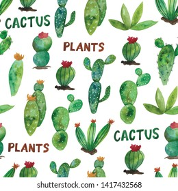 Cactus Images, Stock Photos & Vectors   Shutterstock