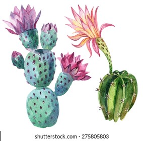 Watercolor cactus set isolated on white background. Hand painted illustration
