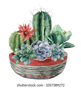 Watercolor cactus with succulent in a pot. Hand painted cereus, echeveria, echinocactus grusonii with red and blue flowers isolated on white background. Illustration for design, fabric or background