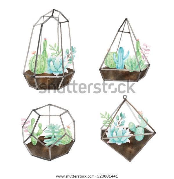 Watercolor cactus terrarium
