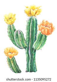 Watercolor cactus with yellow flowers. Raster illustration. illustration for greeting cards, invitations, and other printing projects. on white background.High resolution.Clipping path included.
