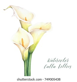 Calla Lily Images Stock Photos Vectors Shutterstock
