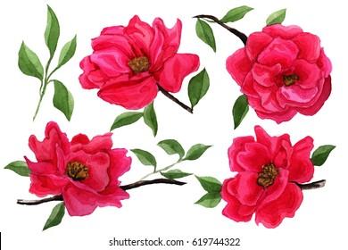 Watercolor camellia flowers set