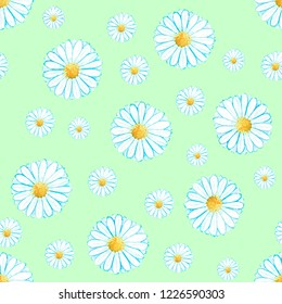 Watercolor camomile / daisy floral seamless pattern