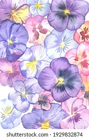 Watercolor card design with hand-painted pansies. Spring flowers background.