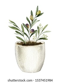 Watercolor card with olive branches in a ceramic pot. Hand drawn illustration for kitchen decor, natural cosmetics, invitations and printing.