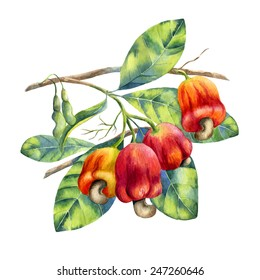 watercolor cashew branch on white background