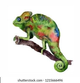 Watercolor chameleon on the white background