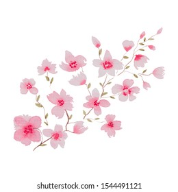 watercolor cherry blossom branch isolated on white, floral illustration with sakura pink flowers