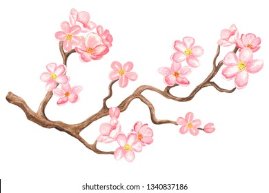 Watercolor cherry blossom. Branch tree with flowers isolated on white background. Hand painting on paper