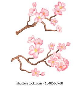 Watercolor cherry blossom. Branch tree with flowers set isolated on white background. Hand painting on paper