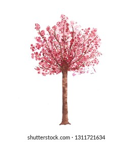 Watercolor cherry blossom tree, hand drawn illustration