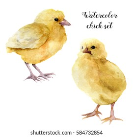 Watercolor chick set. Hand painted young chicken isolated on white background. Cute baby bird illustration for design