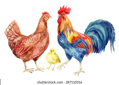 Watercolor chicken family - hen, rooster, chicken. Hand painted illustration