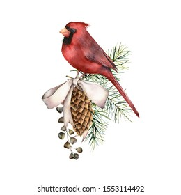 Watercolor Christmas composition with cardinal and bow. Hand painted winter card with bird, fir seeds, cones isolated on white background. Botanical illustration for design, print, fabric, background
