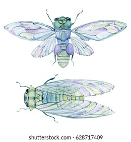 watercolor cicada. Watercolor isolated. Perfect for invitation, greeting cards.