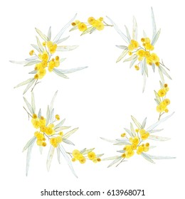 Watercolor circle frame with mimosa brunches isolated on white