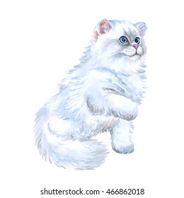 Watercolor close up portrait of British straight longhair kitten breed isolated on white background. Playing white fluffy colouration highland. Hand drawn pet. card design. Clip art illustration