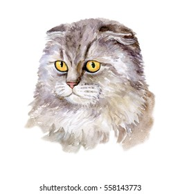 Watercolor close up portrait of popular British fold shorthair cat breed isolated on white background. Lop-eared rare silver chinchilla colouration highland. Hand drawn pet. card design. Clip art