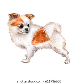 Watercolor closeup portrait of chihuahua dog isolated on white background. Funny dog. Hand drawn sweet home pet. Popular toy smallest dog. Greeting card design clip art illustration