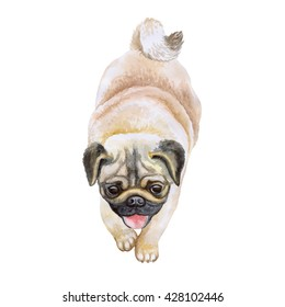 Watercolor closeup portrait of chinese wrinkled pug dog isolated on white background. fluffy toy dog showing tongue. Hand drawn sweet home pet. Popular small breed dog. Greeting card design. Clip art