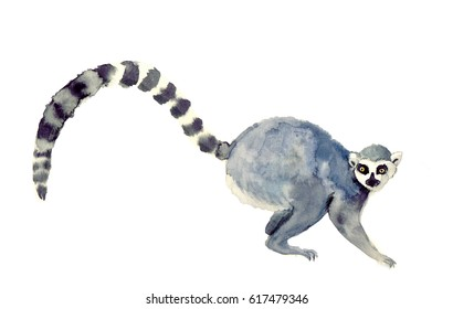 Watercolor closeup portrait of Madagascar Ring-tailed lemur or Lemur  isolated on white background. Hand drawn sweet tropical pet. Greeting card, encyclopedia design. Clip art for web and print