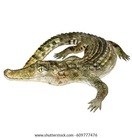 Watercolor Closeup Portrait Nile Crocodile Animal Ilustración de ...