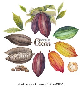 Watercolor cocoa fruit collection isolated on white background. Hand drawn exotic cacao  plants