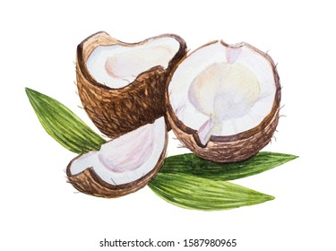 Watercolor coconut isolated on a white background. Two halves of coconut and leaves. Tropical vegetarian food. Hand drawn stock Illustration.