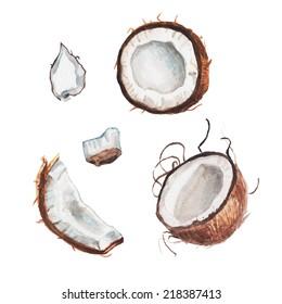 watercolor coconut set