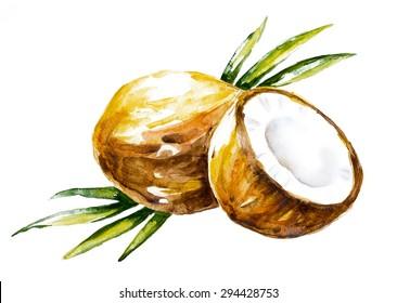 Watercolor coconuts