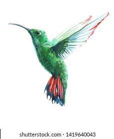 Watercolor colibri hummingbird bird animal illustration isolated on white background