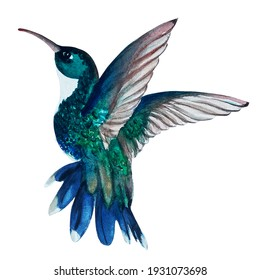 Watercolor COLIBRI (HUMMINGBIRD) BLUE EMERALD element. Hand painted illustration for decorative use, on white background