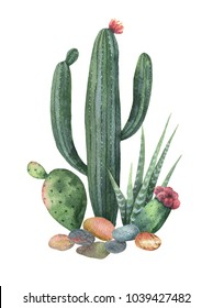 Watercolor collection of cacti and succulents plants isolated on white background. Flower illustration for your projects, greeting cards and invitations.