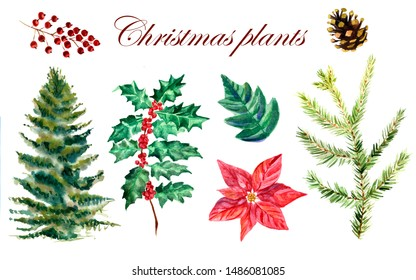 Watercolor collection of Christmas plants with red berries and cone on a white background